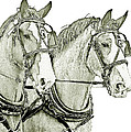 Clydesdale Pair by Larry Linton