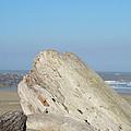 Coastal Art Prints Driftwood Ocean Beach Sky by Baslee Troutman