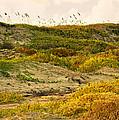 Coastal Plants On Dunes by Marilyn Hunt