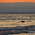 Coasting by James Anderson