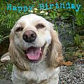 Cocker Spaniel Birthday by Aimee L Maher ALM GALLERY