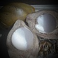 Coconut by Andrew Drozdowicz