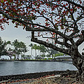 Coconut Island In Hilo Bay Hawaii by Daniel Hagerman