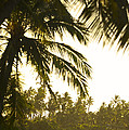 Coconut Palm Trees On The Coast by Jad Davenport