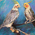 Coctaiel Parrots by Ylli Haruni