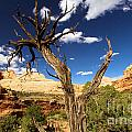 Cohab Canyon At Capitol Reef by Adam Jewell