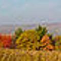 Cohocton Panorama by William Norton