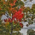 Cold Autumn Breeze  by Michael Frank Jr