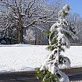 Cold Beauty by Hickory Tree Productions