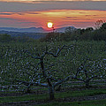 Cold Spring Orchard by Mike Martin