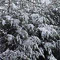 Cold Winter Snow by Ashok Patel