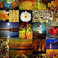 Collage Of Colors by Mark Ashkenazi
