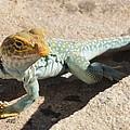 Collard Lizard by Adam Jewell