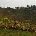 Colline Pavesi by B Russo