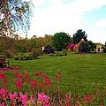Colonial Garden by Susan Carella