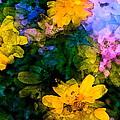 Color 108 by Pamela Cooper