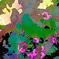 Color 116 by Pamela Cooper