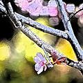 Color 62 by Pamela Cooper