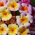 Color Explosion Flowers by Pamela Corey