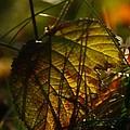 Color Jungle by Odd Jeppesen