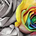 Color My World by Megan Zidek