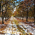 Color Play by Bruno Santoro