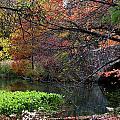 Color Splash In Central Park by Lorraine Devon Wilke