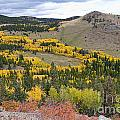 Colorado Autumn Aspens Colors by James BO Insogna