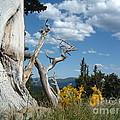 Colorado Hillside by Bev Veals