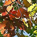 Colorado October by Angelina Vick