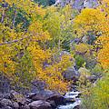 Colorado Rocky Mountain Autumn Canyon View by James BO  Insogna