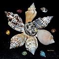 Colored Seashells by Maria Urso