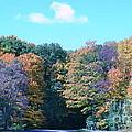 Colored Trees by Dyana Rzentkowski
