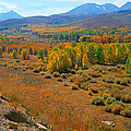 Colorful Aspens by C Sitton