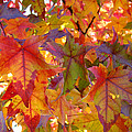 Colorful Autumn Leaves Art Prints Trees by Baslee Troutman