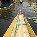 Colorful Boats On Dal Lake Dal Lake by David DuChemin