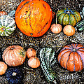 Colorful Fall Harvest by David Lee Thompson