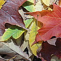 Colorful Fall Leaves by Kathy Lyon-Smith