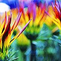 Colorful Flowers Together by Sumit Mehndiratta