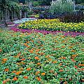 Colorful Garden by Terry Hunt