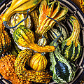 Colorful Gourds In Basket by Garry Gay