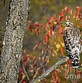 Colorful Hawk