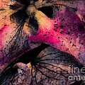 Colorful Hydrangea Abstract. by Emilio Lovisa
