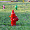 Colorful Hydrants by Amelia Painter