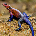 Colorful Lizard by Pravine Chester