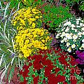 Colorful Mums Photo Art by Debbie Portwood