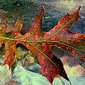 Colorful Oak by Beth Akerman