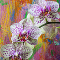 Colorful Orchids by Garry Gay
