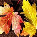 Colorful Pair by Renate Nadi Wesley