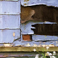 Colorful Siding by Renee Skiba